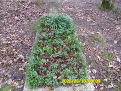 Grab des sowjetischen Kriegsgefangenen Nikolaj Korolew (013055 Stalag 302), 1943 der Luftwaffe unterstellt (Stalag Luft V) und am 4. Juli 1943 auf dem Fliegerhorst Nordholz bei einem Fluchtversuch erschossen. Foto: S. Jesaitis, 2020