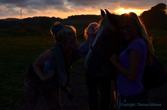 Pferde bis in den Sonnenuntergang