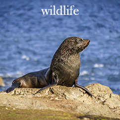 wildlife menubutton seal in the sun