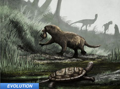 mammals became day dwellers after dinosaurs died