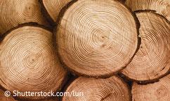 Baumstämme geschnitten - die Zimmerei Tobias Lutz ist Ihr Spezialist für Holzbau in Gechingen und dem Kreis Calw