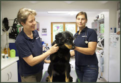 Tierarztpraxis - Kleintierpraxis