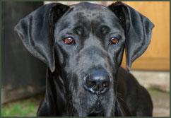 Tierarztpraxis - Sorgenfelle