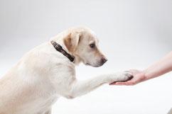 イメージ写真:健康相談(無料)や飼育相談・しつけ相談