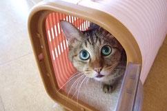 イメージ写真:キャリーケースに入った猫