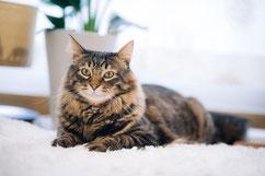 イメージ写真:猫