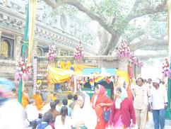 菩提樹下の仏教徒