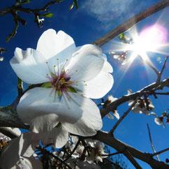Frühling und Karneval auf Ibiza