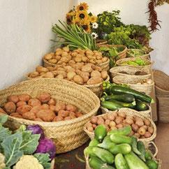 Bio-Gemüse direkt vom ibizenkischen Bauern