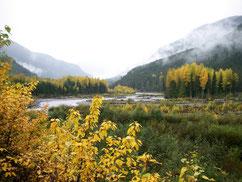 Steelhead heaven Copper river