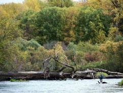 Tseax River
