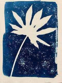 Cyanotype de végétaux au printemps Brigitte Morel