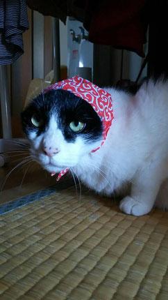 お友達の猫〝セサミ〟です。キミも〝血〟を裏からなめるのかな?