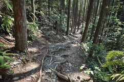 木の根道は結構大変です