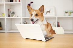 Hundeschule Bremen - Hundeschule MOMO - Tierschutzhunde