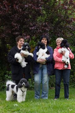 Fred, Bob und Ruby besuchten die Magic Hearts mit ihren Frauchen
