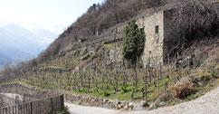 Vitigni terrazzati di Tirano