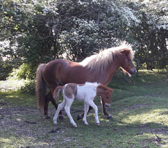 Hamingja und Leikur im Juni 2017