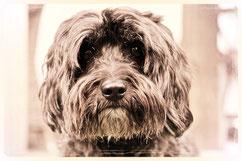 Hundesalon Plisch & Plum - Schneiden, Trimmen und mehr
