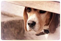 Hundesalon Plisch & Plum - Fellpflege für jeden Hund