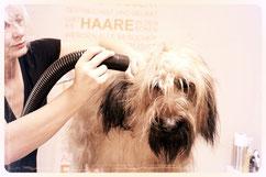 Hundesalon Plisch & Plum - Fellpflege