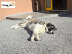 RHINA, der Wachhund der Anlage :)