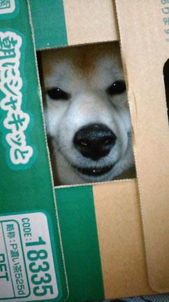 今日は「愛犬の日」だそうです。