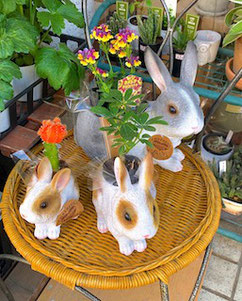 練馬桜台ガーデニングショップ かのはの ウサギのプランターに植物を入れて元気で可愛いプレゼント
