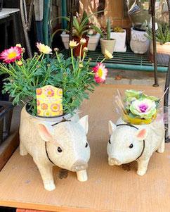 練馬桜台ガーデニングショップ かのはの ほのぼのとしたブタの親子のプランター