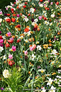 Des fleurs magnifiques dans le Rosengarten de Munich