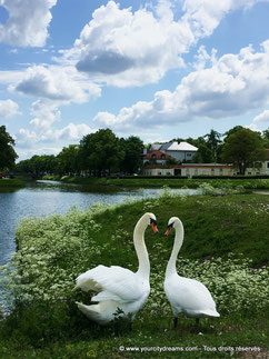 Cygnes Munich, Bavière