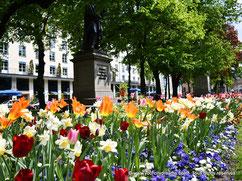 La promenadeplatz, à Munich, avec ses parterres de fleurs