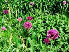 Fleurs Westpark