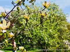 Tourisme en Bavière - Des jardins urbains fleuris et agréables