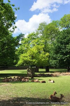 Les biches et cerfs au bord du Biergarten Hirschgarten