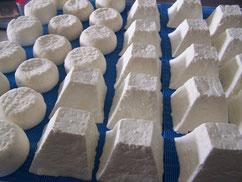 fromages de chèvre en égouttage 2 jours après le démoulage