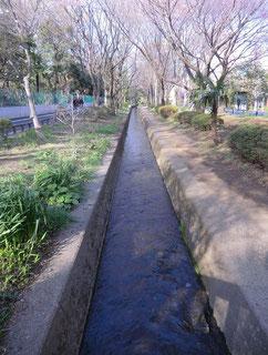 ●千川上水の流れです
