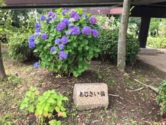 花・植物の遊び場。名古屋を中心に「花・植物」で遊べる公園や施設まとめ