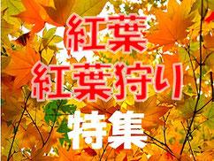 【紅葉・紅葉狩り特集】東海地区の紅葉スポットやライトアップ情報まとめ