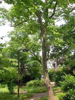 横浜市南区 蒔田城の跡地 蒔田の森公園