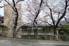 前事務所担当物件(横内敏人建築設計事務所):桜並木の家 画像