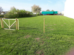 Hundefreilauf beim Hundefreilauf Stade