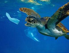 Fische oder Schildkröten verwechseln solchen Müll, mit Futter, z.B. mit Quallen! Viele verenden dadurch qualvoll!