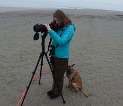 Nora Wuttke Vogelbeobachtung