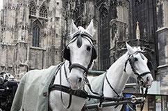 da schauen sogar die Pferde..