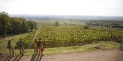 Wein & Wald