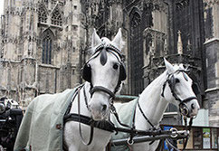 Minivan or horse-carrige?