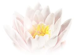 Lotus, Seerose, Erwachen, Erleuchtung