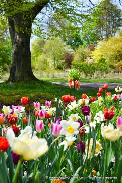 Les parterres de fleurs du Rosengarten à Munich