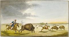 Büffeljagd im Sommer (1822)